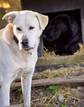 CARLOS, Hund, Labrador Retriever-Mix in Spanien - Bild 10