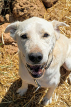 CARLOS, Hund, Labrador Retriever-Mix in Spanien - Bild 13