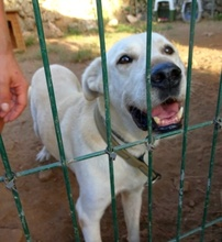 CARLOS, Hund, Labrador Retriever-Mix in Spanien - Bild 15