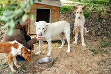 CARLOS, Hund, Labrador Retriever-Mix in Spanien - Bild 6