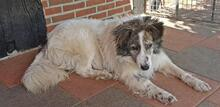 EVITA, Hund, Border Collie-Mix in Hoogstede - Bild 10