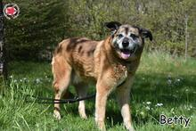 BETTY, Hund, Mischlingshund in Donzdorf - Bild 3