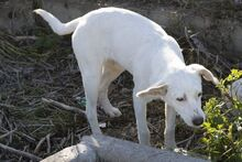 ASIA, Hund, Mischlingshund in Much - Bild 22