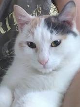 Katzenschnurren heilt - Rückenschmerz und Co