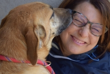 MARCIA, Hund, Malinois-Mix in Italien - Bild 3