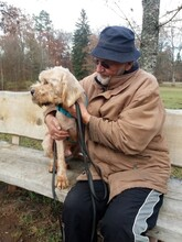 SULTAN, Hund, Griffon-Mix in Donaueschingen - Bild 4