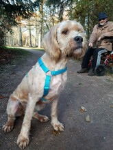 SULTAN, Hund, Griffon-Mix in Donaueschingen - Bild 5
