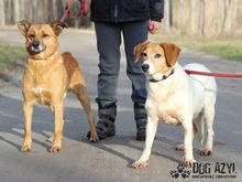 JULIA, Hund, Foxhound-Mix in Slowakische Republik - Bild 3