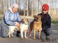JULIA, Hund, Foxhound-Mix in Slowakische Republik - Bild 4