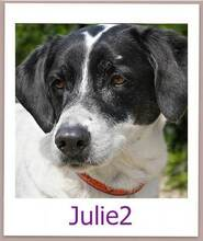 JULIE2, Hund, Terrier-Mix in Zypern