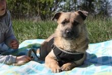 LUKE, Hund, Border Terrier-Mix in Ungarn - Bild 1