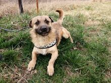 LUKE, Hund, Border Terrier-Mix in Ungarn - Bild 10