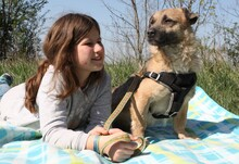 LUKE, Hund, Border Terrier-Mix in Ungarn - Bild 3