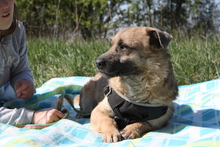 LUKE, Hund, Border Terrier-Mix in Ungarn - Bild 5