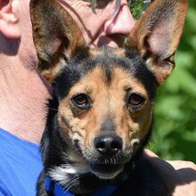 RICA, Hund, Pinscher-Mix in Moers