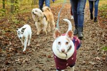 NATA, Hund, Podenco-Mix in Berlin - Bild 16