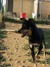 LOKI, Hund, Pinscher-Mix in Spanien - Bild 11