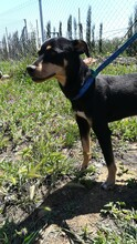 LOKI, Hund, Pinscher-Mix in Spanien - Bild 7