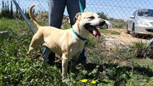 MERCHI, Hund, Labrador-Mix in Spanien - Bild 10