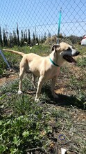 MERCHI, Hund, Labrador-Mix in Spanien - Bild 14