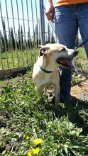 MERCHI, Hund, Labrador-Mix in Spanien - Bild 5