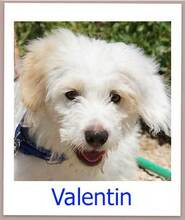 VALENTIN, Hund, Terrier-Mix in Seevetal