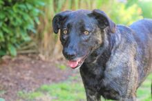 CANDY, Hund, Bardino-Mix in Nohfelden