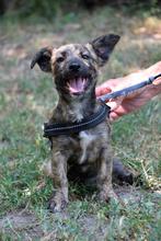 Tierheim-Hunde suchen und finden