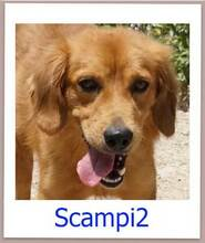 SCAMPI2, Hund, Spaniel-Mix in Zypern