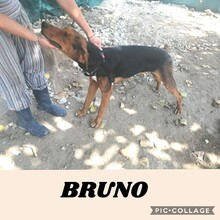 BRUNO, Hund, Dobermann in Italien - Bild 2