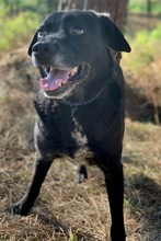 PACO, Hund, Labrador-Mix in Portugal - Bild 12