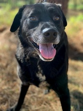 PACO, Hund, Labrador-Mix in Portugal - Bild 13