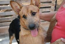 MARA, Hund, Podenco-Terrier-Mix in Spanien - Bild 10