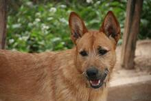 MARA, Hund, Podenco-Terrier-Mix in Spanien - Bild 2