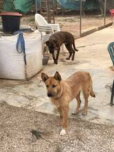 MARA, Hund, Podenco-Terrier-Mix in Spanien - Bild 7