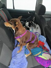 ELFI, Hund, Podenco-Mix in Staßfurt - Bild 14