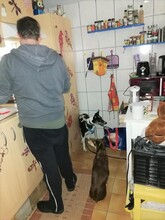 ELFI, Hund, Podenco-Mix in Staßfurt - Bild 15