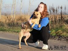 ADELLE, Hund, Shar Pei-Mix in Slowakische Republik - Bild 5