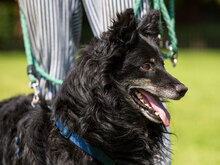 ZIP, Hund, Spitz-Collie-Mix in Kroatien - Bild 8