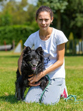 ZIP, Hund, Spitz-Collie-Mix in Kroatien - Bild 9