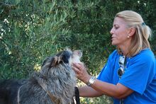 GUILLE, Hund, Gos d' Atura Catalan-Mix in Spanien - Bild 22