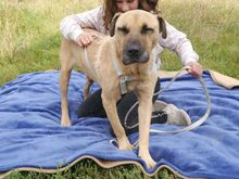 BRUNO, Hund, Kangal-Mix in Ungarn - Bild 14