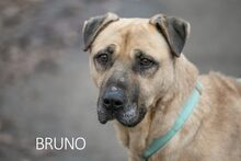 BRUNO, Hund, Kangal-Mix in Ungarn - Bild 22