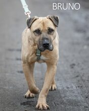 BRUNO, Hund, Kangal-Mix in Ungarn - Bild 24