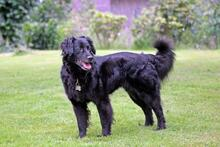 DOLLY, Hund, Cocker Spaniel-Mix in Wetter - Bild 3