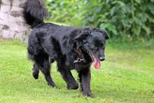 DOLLY, Hund, Cocker Spaniel-Mix in Wetter - Bild 6