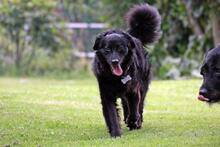 DOLLY, Hund, Cocker Spaniel-Mix in Wetter - Bild 9