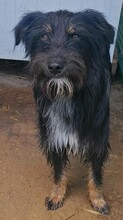 PAULINA, Hund, Terrier-Border Collie-Mix in Kroatien - Bild 3