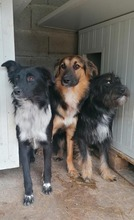 PAULINA, Hund, Terrier-Border Collie-Mix in Kroatien - Bild 9