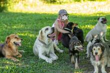 HECKTOR, Hund, Labrador Retriever in Slowakische Republik - Bild 5